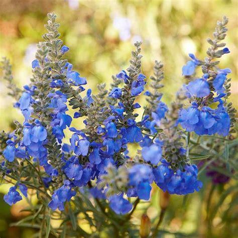 Die Schönsten Blumen 4899 by Die Sch 246 Nsten Blauen Blumen Im Garten Anbauen