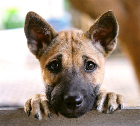 pick cute puppy names cuteness