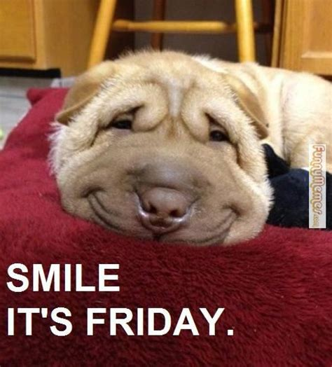 Friday Dog Meme - smile dog memes image memes at relatably com
