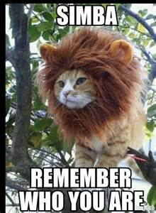 Lion King Cell Phone Meme - cool cat happy valentines day contemplative lion make a