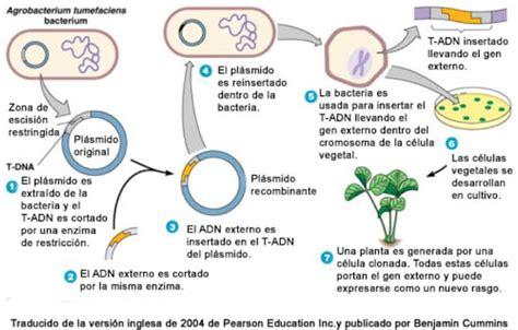 tipos de alimentos transgenicos 191 todo lo que debes saber sobre los alimentos transg 233 nicos