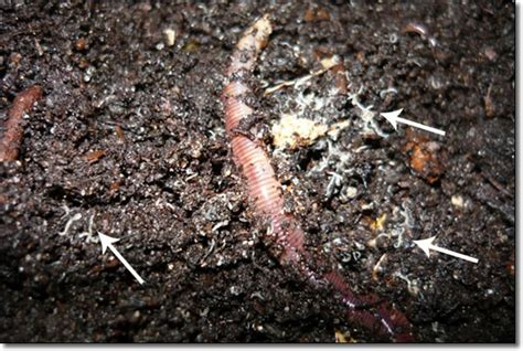 about worms worms4earth worms for sale buy worms for