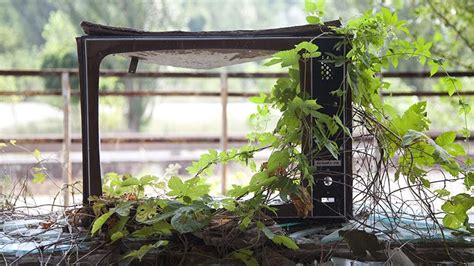Zone Gardening - nature takes over at chernobyl ghost town