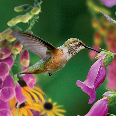 hummingbird ii jigsaw puzzle puzzlewarehouse com