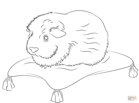coloring page of a guinea pig cute guinea pig sits on a pillow coloring page free
