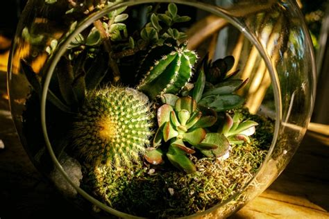 creative ways to decorate your home with plants diy home 4 creative ways to decorate your house with plants