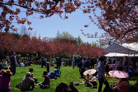 Japanese Festival Botanical Gardens Japanculture Nyc S Guide To Cherry Blossoms In New York City Japanculture Nyc