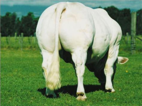 google imagenes vacas 1000 images about vacas on pinterest bucking bulls