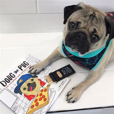 doug the pug coloring book doug the pug on quot leave me alone i m coloring doug s brand new coloring book