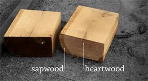 why is heartwood darker in color than sapwood difference between heartwood and sapwood