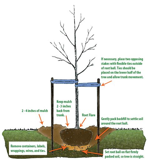 how to plant a tree actrees
