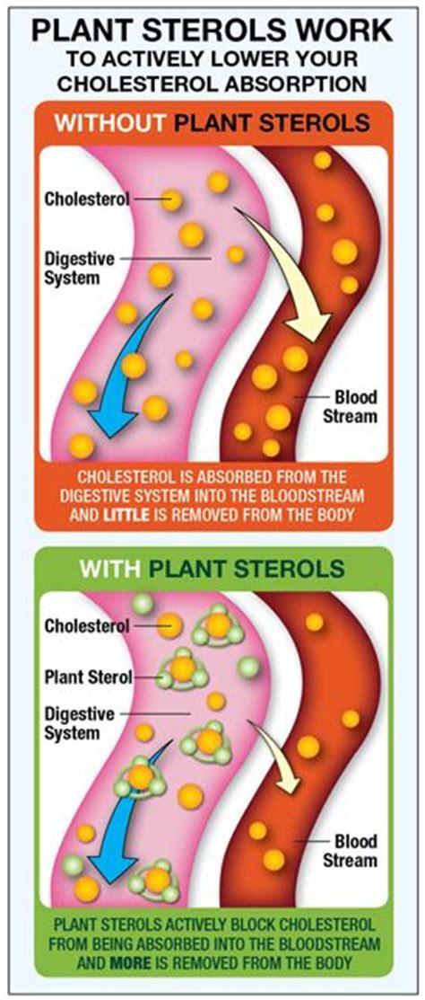 plant sterols lower blood cholesterol levels 11 best heart disease the 1 killer images on pinterest