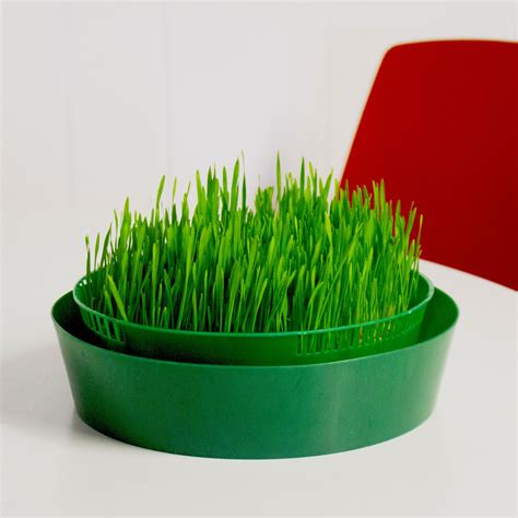 sprout garden  tray stackable seed sprouter seed