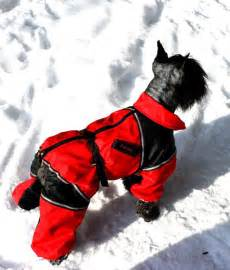 winter coats for dogs best 25 winter coat ideas on coats for winter pet clothes and