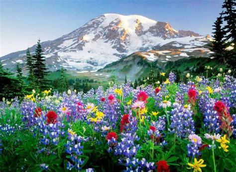 imagenes de paisajes bonitas paisajes de flores para fondos de pantallas fotos