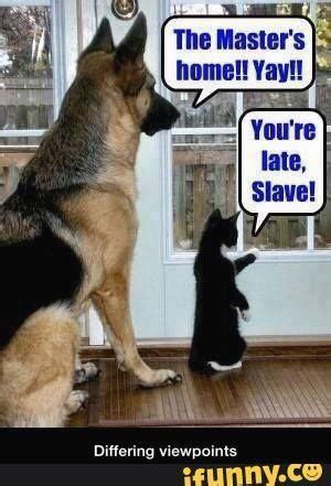 Funny Cat And Dog Memes - best 50 funny cat vs dog memes images to prove who s boss