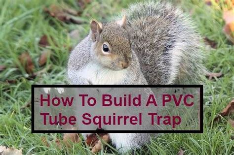how to a squirrel how to build a squirrel trap woodworking projects plans