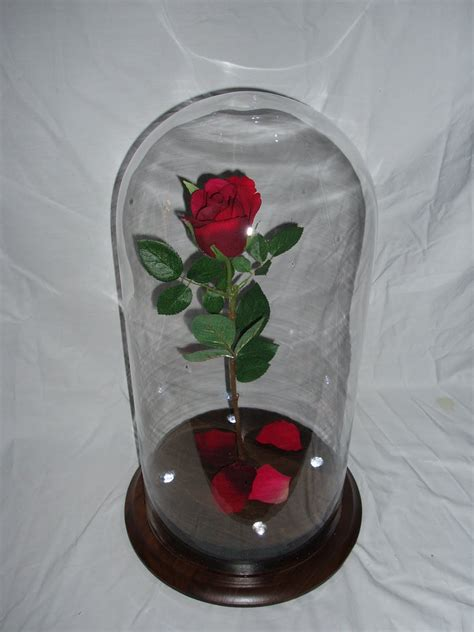 rose in glass proprentalsny com long island and new york s best source