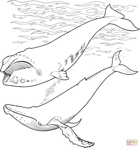 coloring page of humpback whale right whale and humpback whale in the ocean coloring page