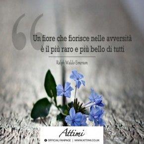 aforismi sui fiori citazioni sui fiori fiori idea immagine
