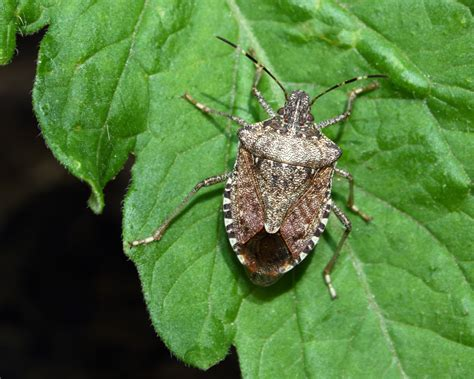 beneficial insects fight recalcitrant garden pests
