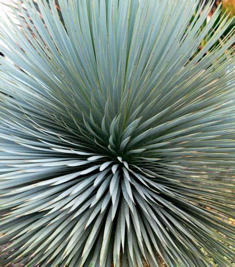 piante esotiche da giardino y di yucca le cultivar pi 249 rustiche piante esotiche da