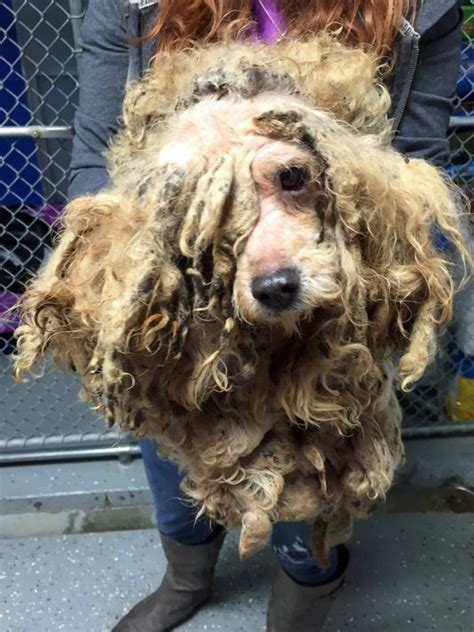 puppy nightmares nightmare backyard bust gives glimpse inside a puppy mill