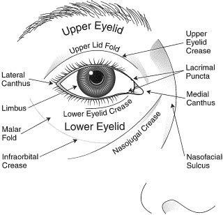 how to draw eye diagram how to draw picmia