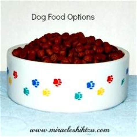 how often should you feed a shih tzu can i feed my puppy dried food foodfash co