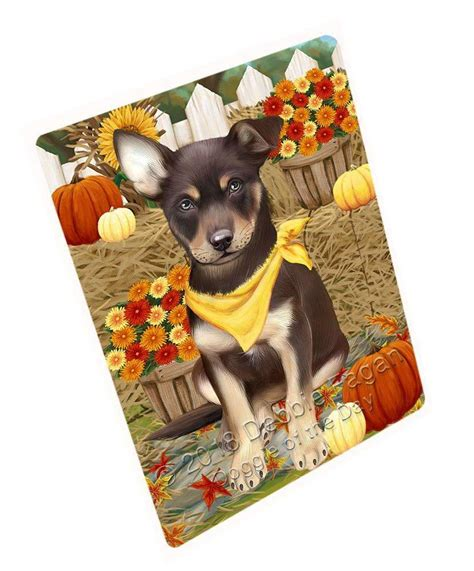 fall autumn greeting australian kelpie dog  pumpkins