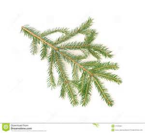 christmas tree branch stock image image 11737951
