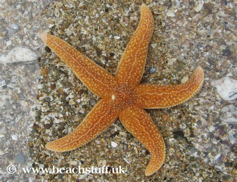 starfish images starfish in newspaper pictures to pin on thepinsta