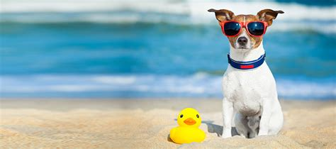 Vacation Pet Pet Pet Product by Pawleys Island Vacation Rentals Pawleys Island Sc The