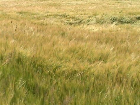 South Grass by Grass Blowing In The Stock Footage