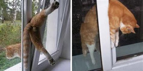 fenster stuck secure your windows for your cat s safety land of cats