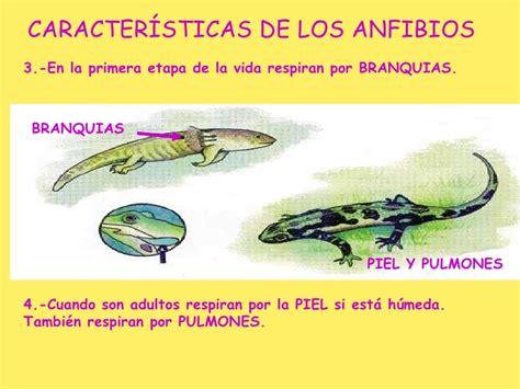 los peces de la 8483835460 animales vertebrados