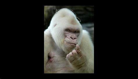 imagenes de animales albinos metro 95 1 ins 243 litos animales albinos