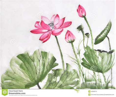 Emberly Top Z By Lotuz lotus flower watercolor painting stock illustration