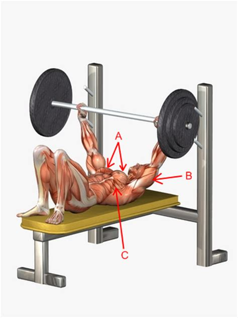 bench press feet up quick fat burning exercises don t miss these belly fat loser
