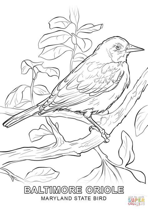 coloring page of florida state bird florida coloring page coloring page of florida state bird