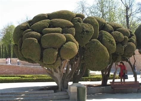 the world 180 s tree species sculptured cypress trees retiro park