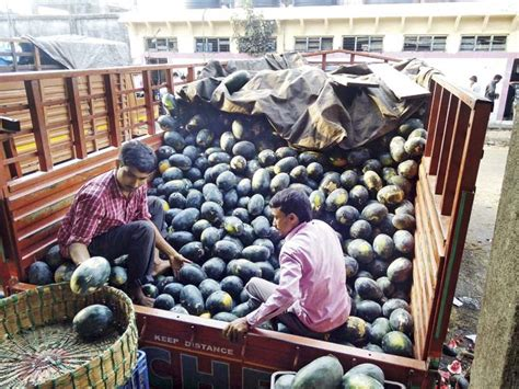 vashi market navi mumbai time to feast on watermelons as prices fall