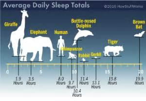Variations of sleep amongst species the greatest wordpress com site