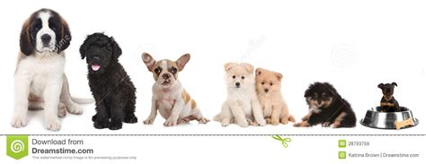 different puppies different breeds of puppy dogs on white royalty free stock images image 28793759