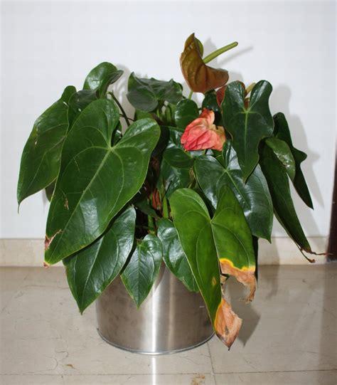 wohnung pflanzen pflanzen sterben in der wohnung kunstpflanzen als aternative