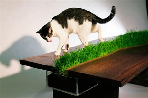 cat table cat friendly table with built in grass planter freshome com