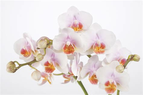 Wall Mural Forest soft orchidee wall mural amp photo wallpaper photowall