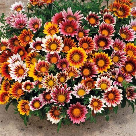 piante da vaso per esterni piante da vaso per esterno piante da giardino piante