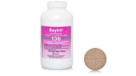 enrofloxacin for dogs baytril taste tabs for and cat bacterial infections petcarerx