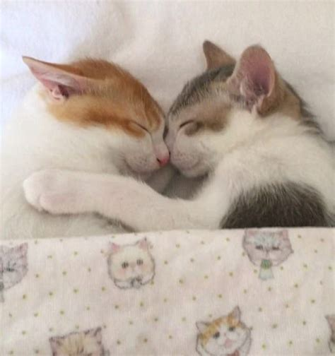 brother sister share bed adorable cat siblings brother sister sleep together bed 2 fluffy s world